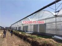 玻璃智能温室大棚供应